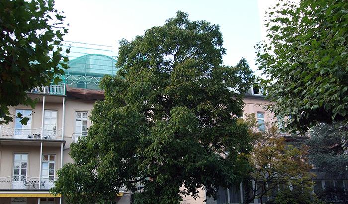 Fotografie: Bad Homburg, früherer Standort des Sanatoriums Dr. Rosenthal, 16.10.2013
